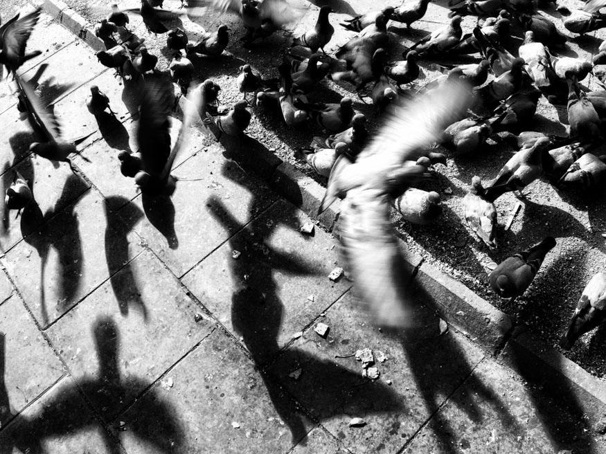 Photograph-by-Pulak-Bhatnagar-P3130880